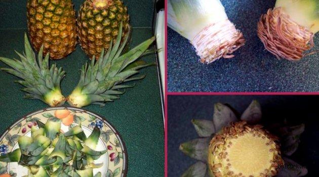 Ananas Yapraklarından Salon Bitkisi Yetiştirmece