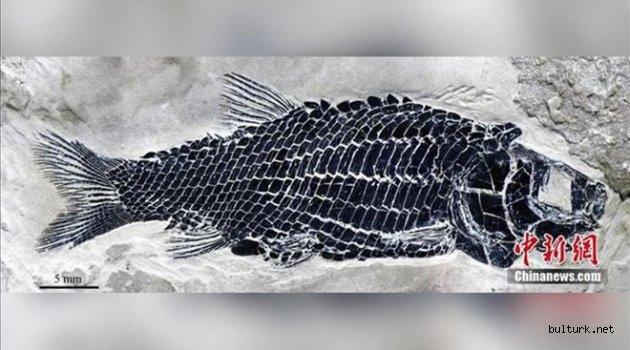 Çin´de 244 milyon yıl öncesine ait balık fosili bulundu