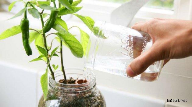 Evde Biber Nasıl Yetiştirilir?