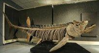 Arjantin´de 70 yıl önce bulunan balık fosilinin 70 milyon yıllık olduğu keşfedildi