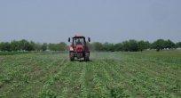 Bulgaristan'da tarım üreticileri için kış ilaçlama başvuruları