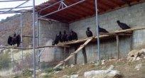 Kara Akbabalar Rodoplar'a dönüyor
