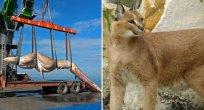 Türkiye'de Yaşayan Ancak Rastlaması Hiç de Kolay Olmayan Hayvanlar